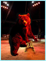 The bear at the Circus